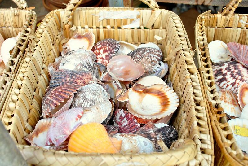 shells, north shore