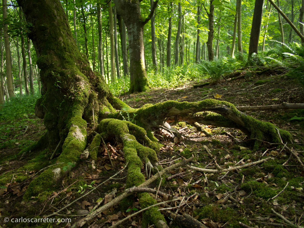 Bosque de Dunnottar