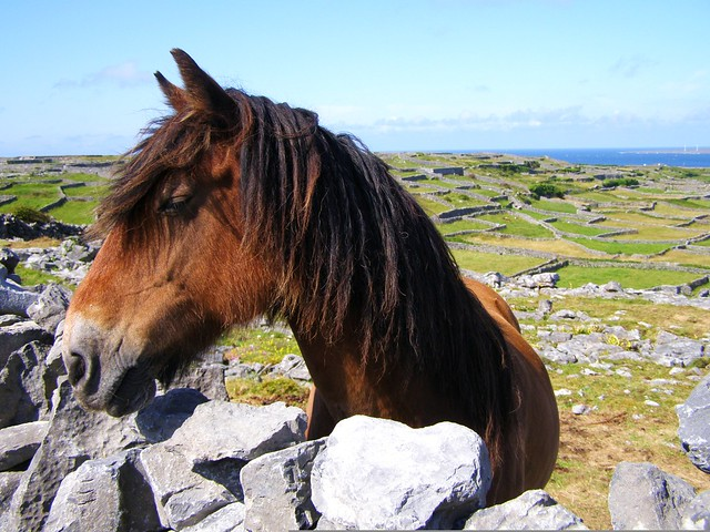 Horse on Inis Oirr, Ireland