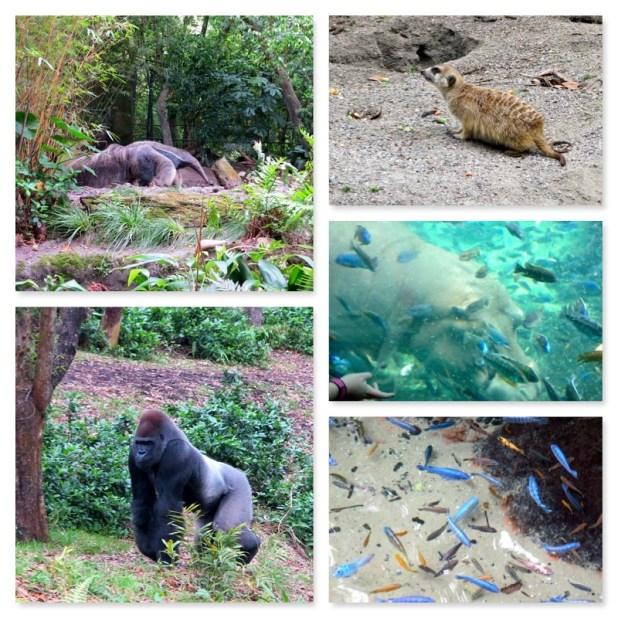 Animal Kingdom Orlando