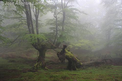 En la niebla #DePaseoConLarri #Photography  12