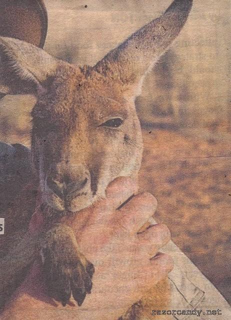 Kangaroo Dundee (3)
