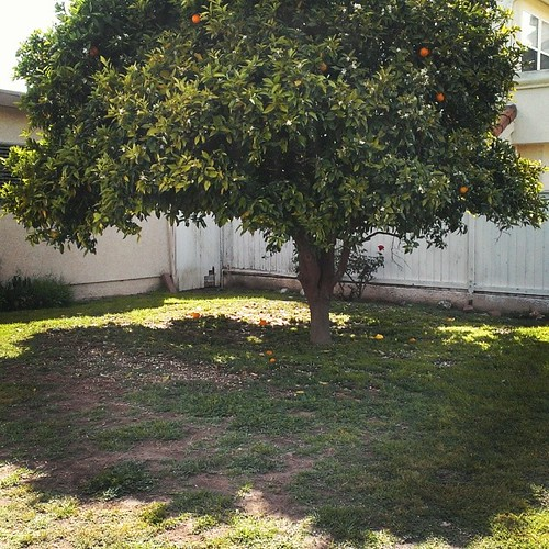 Goodbye, my beloved orange tree. I will miss you most of all... #timetostartplanting