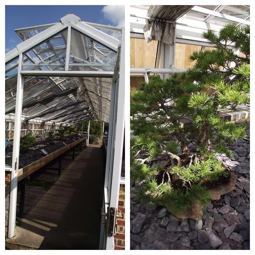 Bonsai - Kew