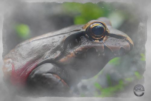 frog in fog