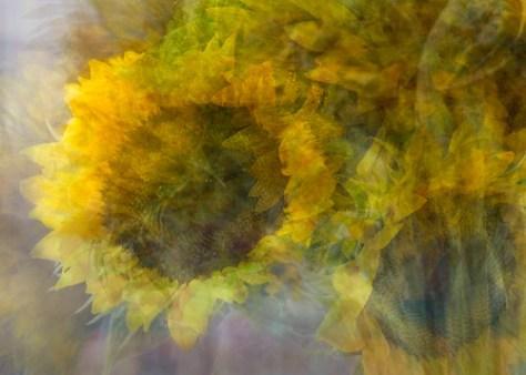 sunflowerdsc2390etal_detail3.jpg