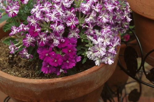 pretty purple