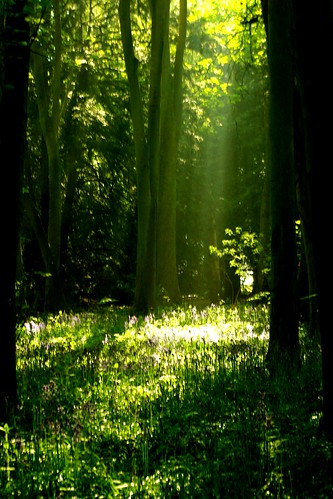 20130519-08_Cawston Bluebell Woods-Shafts of Sunlight by gary.hadden