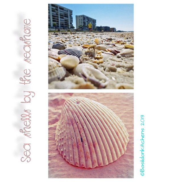 Sep 30 - found {lots & lots of seashells} #fmsphotoaday #found #shells #gulfofmexico #florida