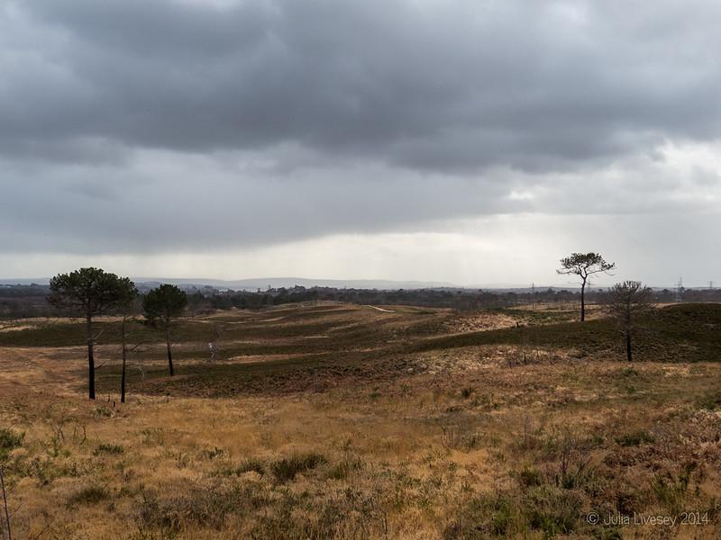 View across Upton Heath