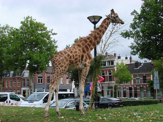 Griftpark Giraffe