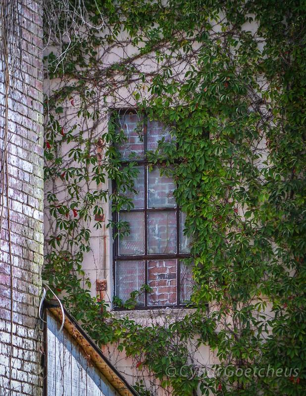 phoebus window  cjane