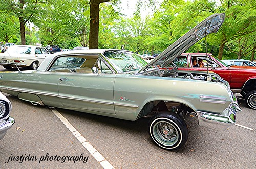 SHADE OF BROWN IMPALA   (9)