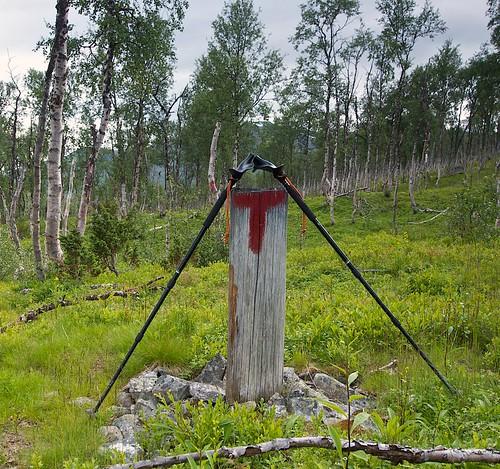Pacer Poles Bjøllåga, Nordland Norway