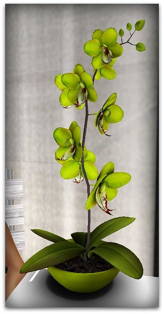 GREEN ORCHID FREE