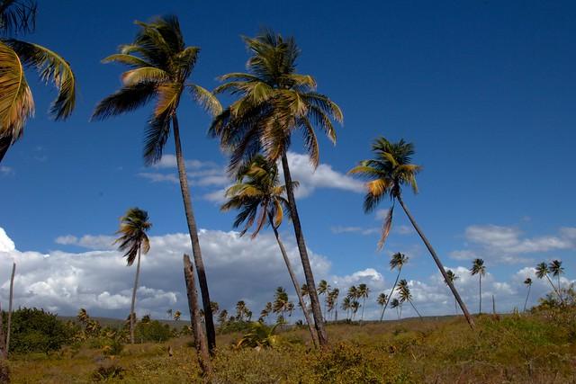 Puerto Rico-2014-02-05-31