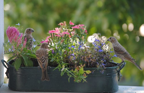 birds and flowers (1/6)
