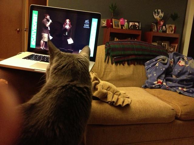 a cat, enjoying the streamed internet cat film festival #project365
