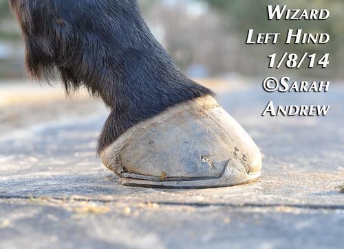 Wizard's feet: 2014