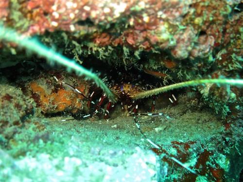 Phuket scuba diiving