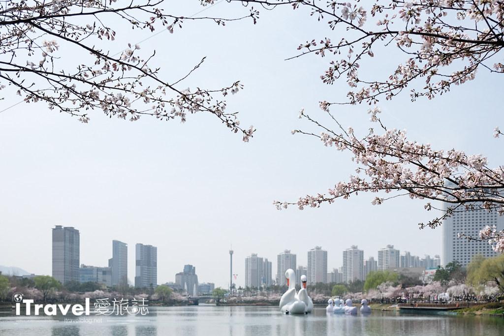 首尔赏樱景点 乐天塔石村湖 (31)