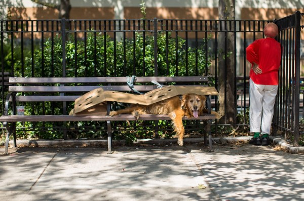 Hot Dog in a Cardboard-Bench Bun