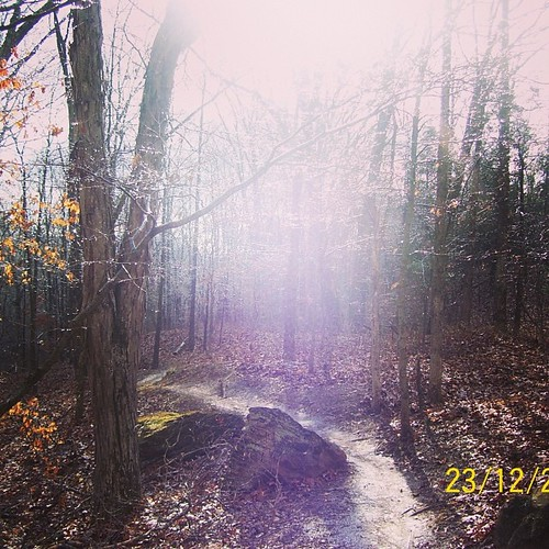 A light in the forest. #trails #mtb #winter #icytrees #lostvalley