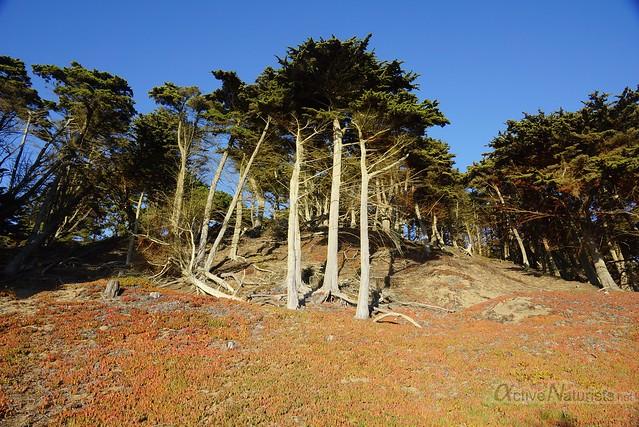 naturist 0037 Baker Beach, San-Francsico, CA, USA