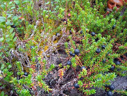Crowberries