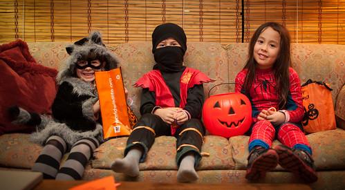 Raccoon, Ninja, Spidey