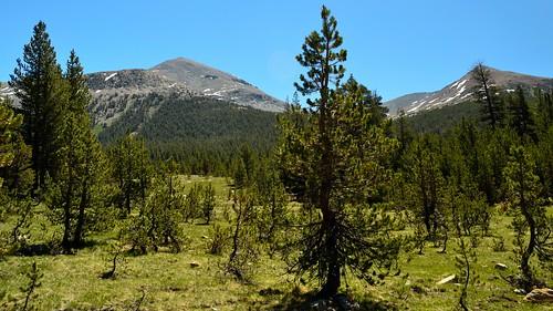Mono Pass Trail 02