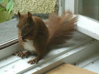 Eichhörnchen zähmen 4