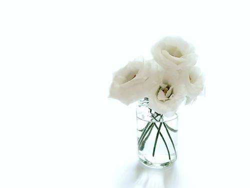 White by [Piccola_iena]