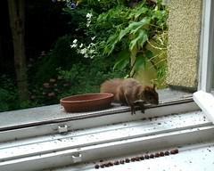Eichhörnchen 3.2
