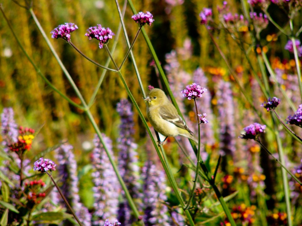 Wildlife in the Garden (3/6)