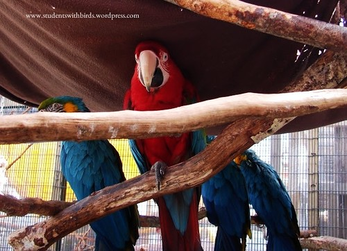 Seven Reasons Why Parrots Are Not Good Pets  – Three Birds