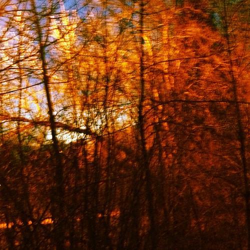 Nature Trail by @MySoDotCom