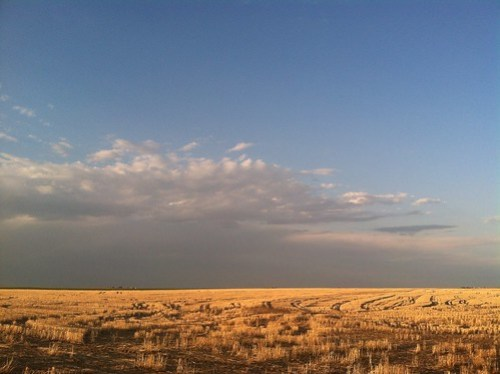 Z Crew: Golden Hour in the Wheat Field