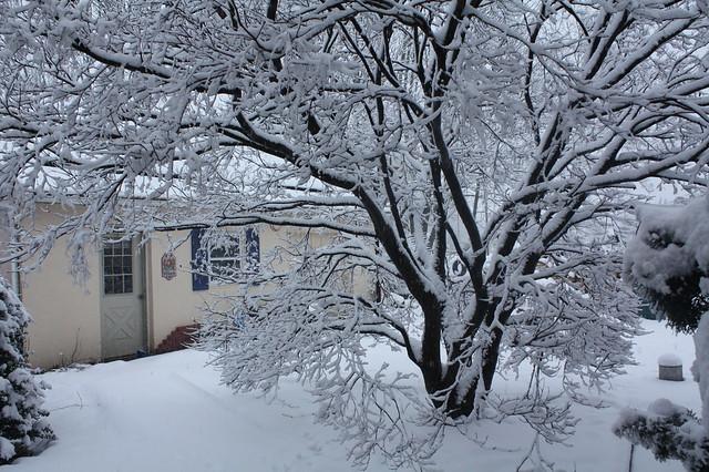 Snow Day (again)