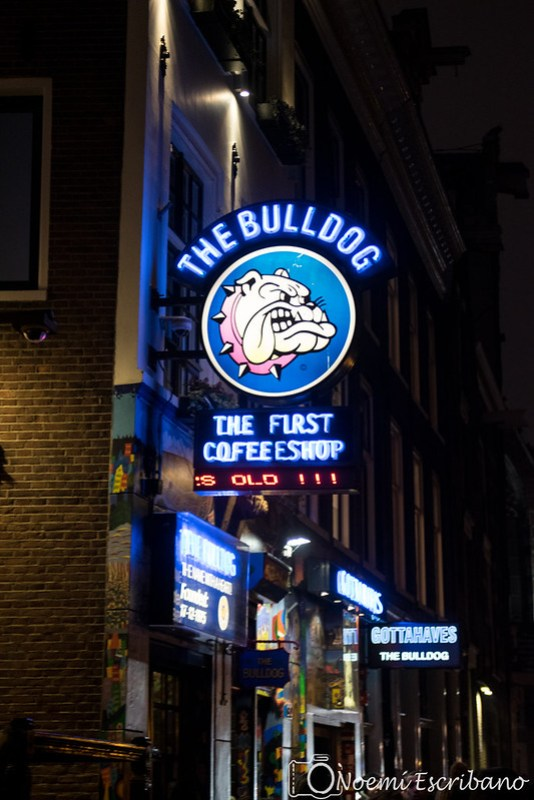 The Bulldog - primer coffeeshop