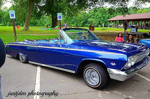 BEAUTIFUL BLUE  IMPALA VERT (10)