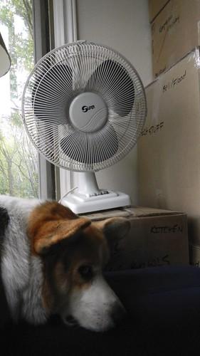 Fan of Summer 1