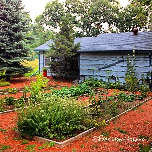 Aug 21 - grow {to my amazement, my garden did grow and actually produce!} #photoaday #grow #garden #veggies #herbs #rhubarb