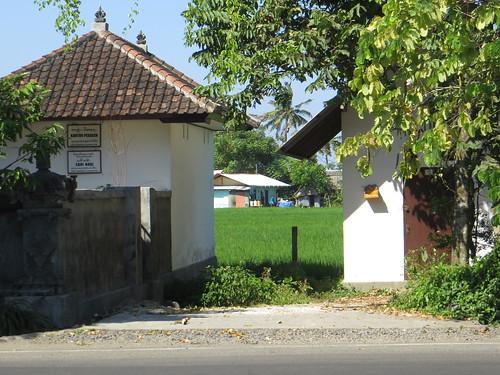 a glimpse of rice paddies