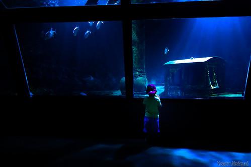 sea child aquarium by Zeeyolq Photography