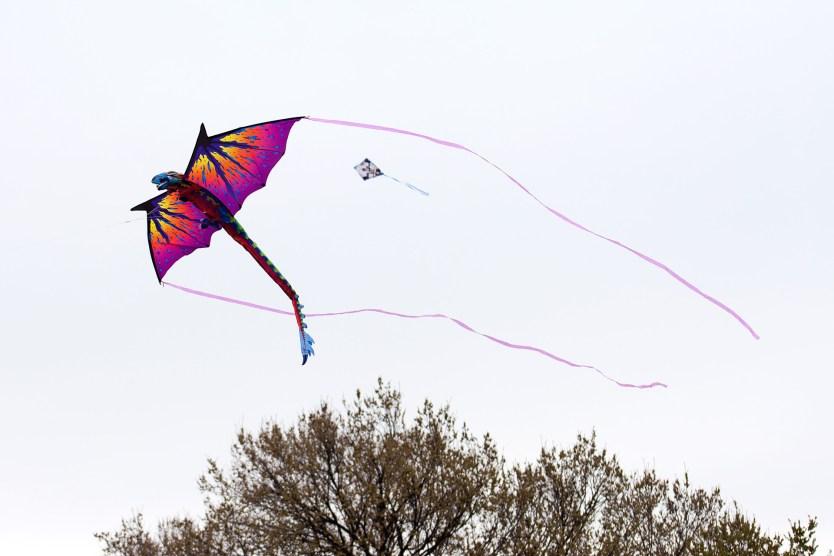 Dragon kite, Kite Festival.