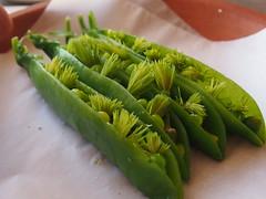 Peas, pine and chamomile