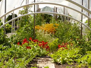 Part of Vegetable Garden