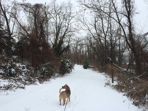 Potomac Greens Trail