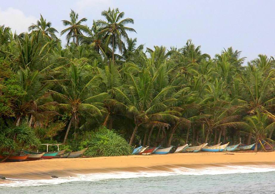 #travelbloggerindia #southsrilanka#srilankatourism #mirissabeach